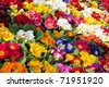 a sea of primroses - stock photo