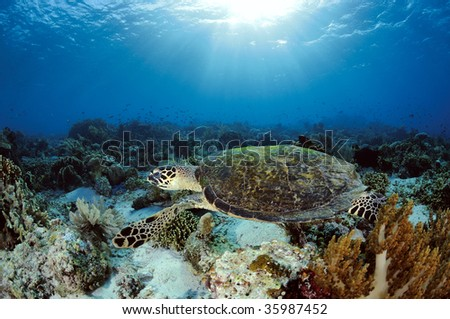 A sea turtle and sunlight