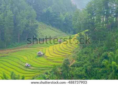 a selective focus picture of a cottage at terrace rice field