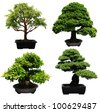 A set of aged bonsai trees - stock photo