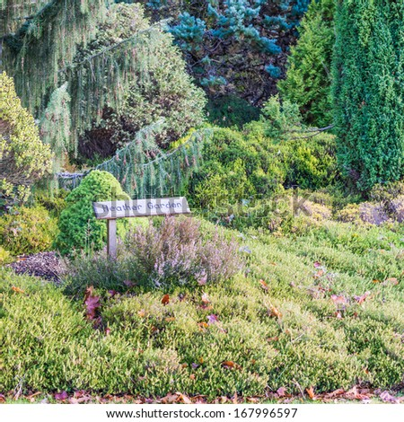 A shot of a dormant heather garden in autumn.
