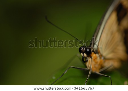 A single butterfly against a blurred green background with dark edges.