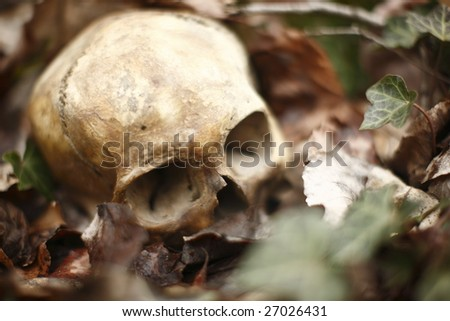 A skull laying in the brush in a forest.