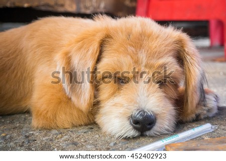 A sleeping half brown and orange hair color dog on cement floor with a plastic straw at the front
