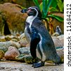 a standing penguin at Barcelona Zoo, Spain - stock photo