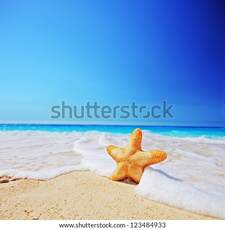 A starfish on a beach with clear sky, shot with a tilt and shift lens