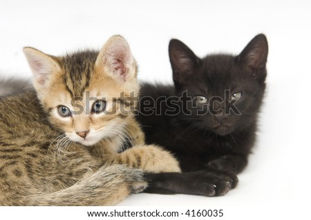 A tabby and a black kitten sit on a white background