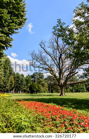 A tree at foreground with a magical green park on background in a sunny summer day