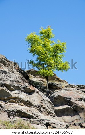 A tree grows in the cracks in the rock against the blue sky .