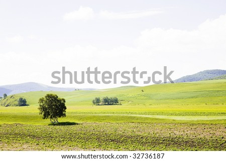 A tree  in the farmland