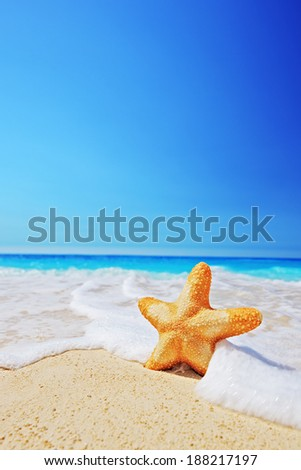 A view of a starfish on a beach with clear sky and wave, Greece