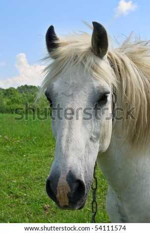 a white horse is on a background sky