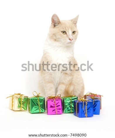 A yellow kitten sits next to a pile of miniature presents on white background