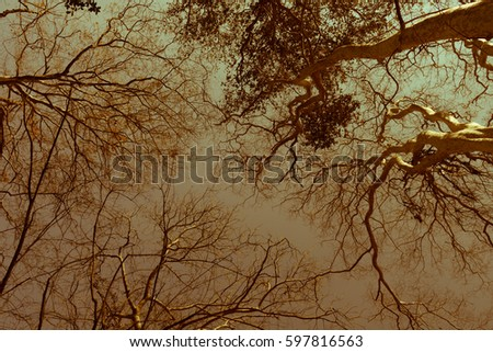 abstract autumn summer sun shining through canopy of tall trees sunlight in deciduous forest