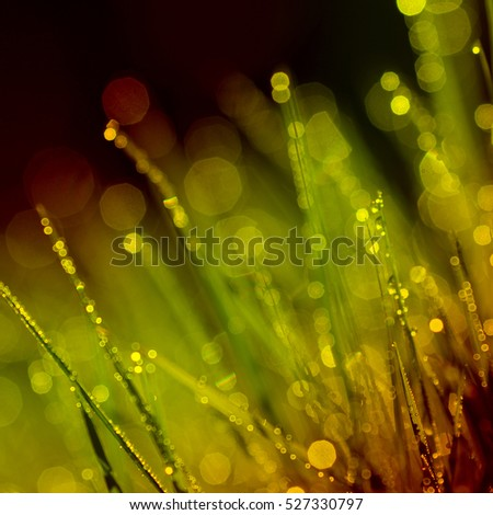 Abstract background of shining a bright morning dew. warm toning color