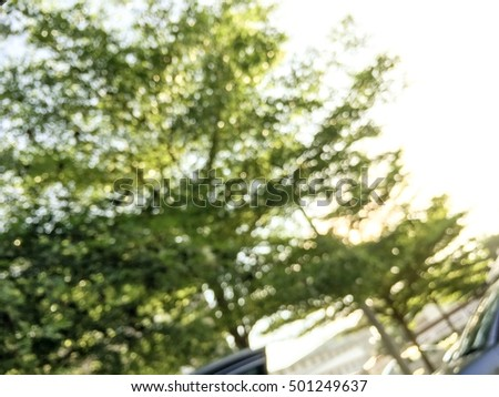 Abstract bokeh of green tree, nature bokeh, leaf bokeh, tree bokeh, in the park, in the outdoor