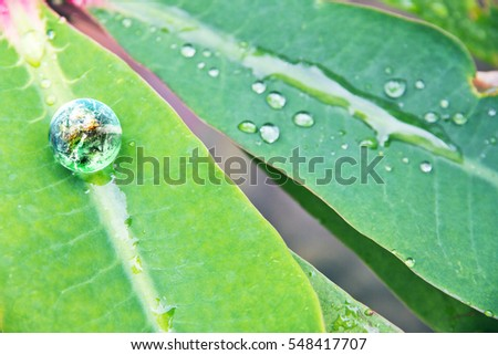 abstract image of small world in nature, Environment Conservative concept  ( Elements of this image furnished by NASA)