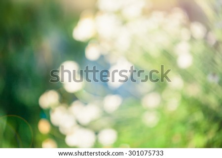 Abstract nature blured background with beautiful bokeh. Defocused green background with sunshine and leaves. Blur image of a meadow with daisies.