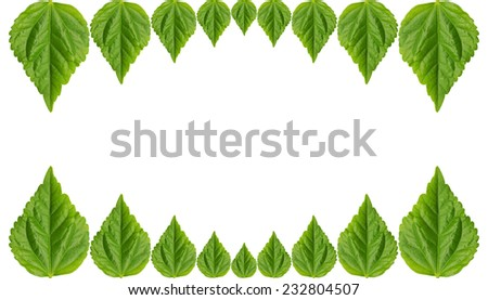 Abstract of green leaf isolated on white background