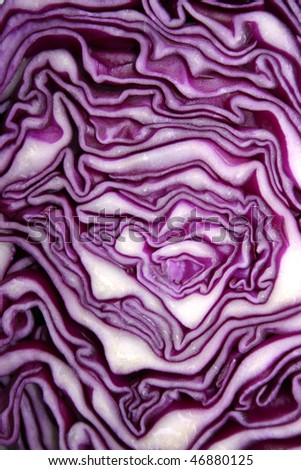abstract photo of red cabbage