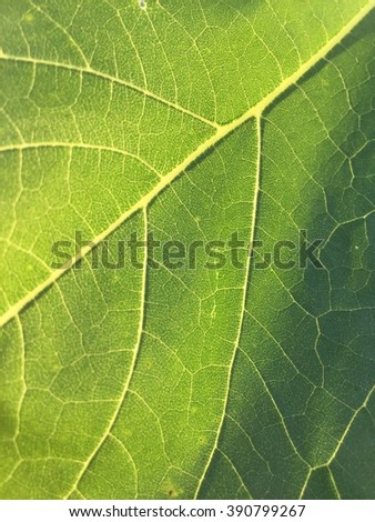 Abstract soft focus of closeup green leave texture with soft sunlight