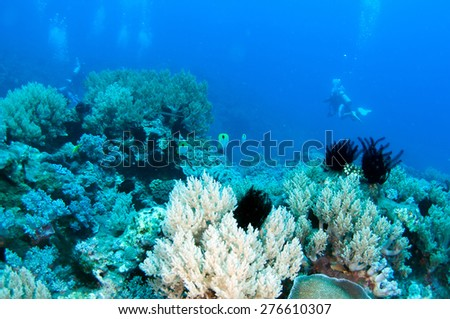 Abstract underwater scene, colorful coral reef.