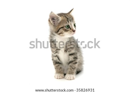 Adorable kitten looking aside