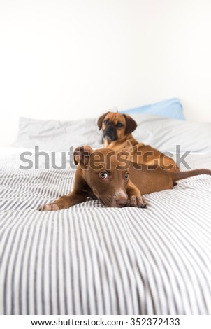 Adult Dog and Puppy on Bed
