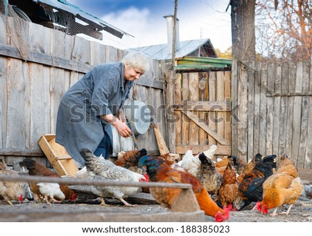 adult woman takes care of the poultry on the farm
