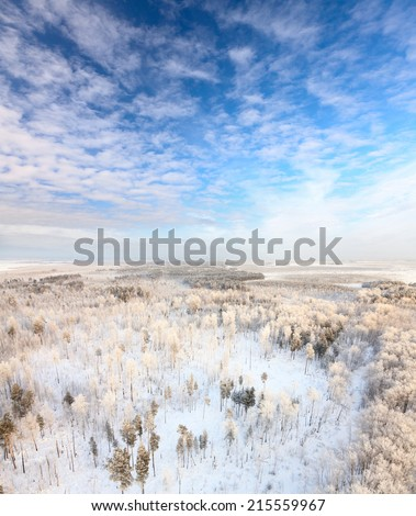Aerial view of forest in hoarfrost during frozen winter day.  A winter forest on rising in a hard frost.
