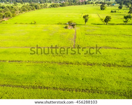 Aerial view of rice fields in Thailand