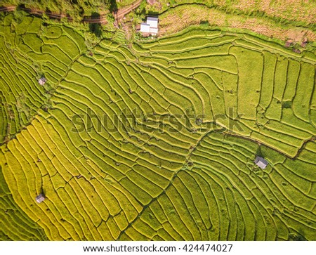Aerial view of Terraced Rice Field, Thailand