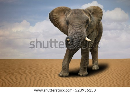 African Elephant Outdoors in Daylight