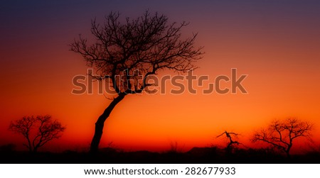African sunrise in the Kruger National Park, South Africa