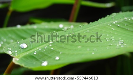 After raining. Drop water on the green leaf, feel refreshes