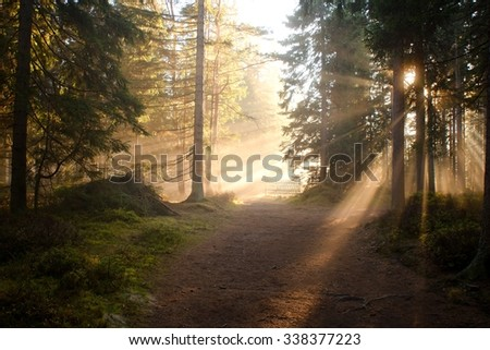 Afternoon autumn light while walking on a path in coniferous forest.