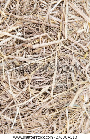 agriculture, ecology and drought concept - dry grass or hay texture