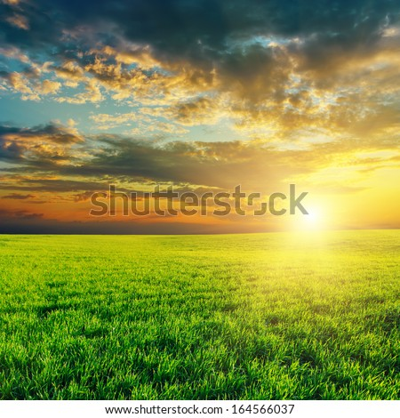 agriculture green field and sunset