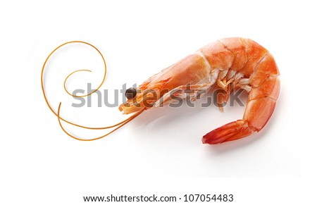 Alone isolated hot-water shrimp with the whisker on the white