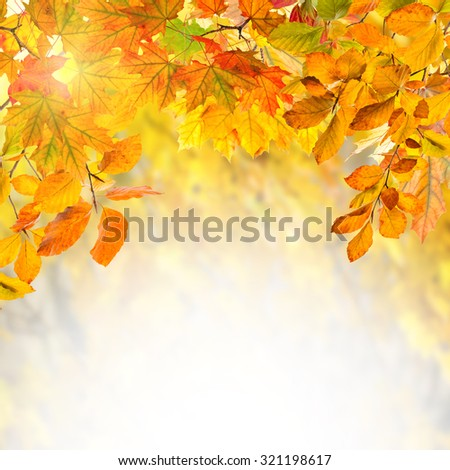 Amazing nature golden autumn background for your design