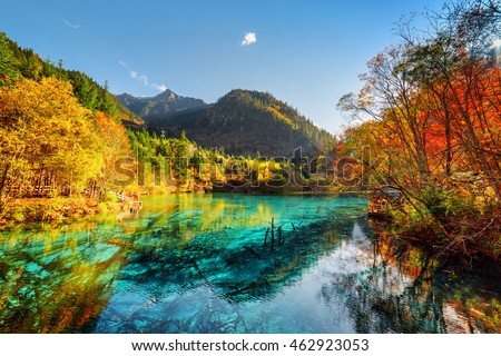 Amazing view of the Five Flower Lake (Multicolored Lake) with azure water among fall woods in Jiuzhaigou nature reserve (Jiuzhai Valley National Park), China. Submerged tree trunks at the bottom.