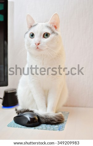 Amazing white cat sitting near a computer mouse