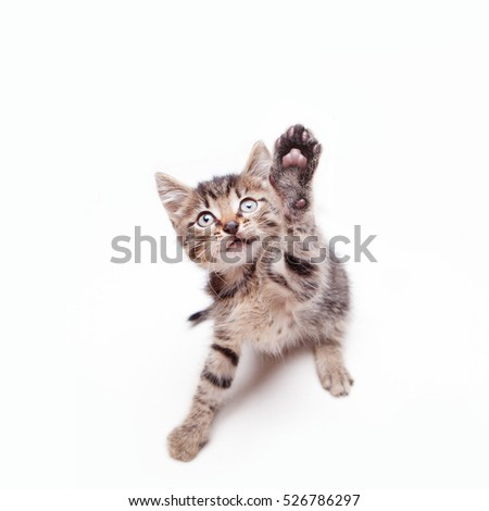 An adorable kitten jumping and stretching its paw