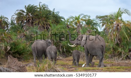 an elephant family in the savannah of Kenya