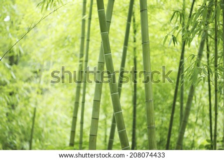 An Image of Bamboo Forest