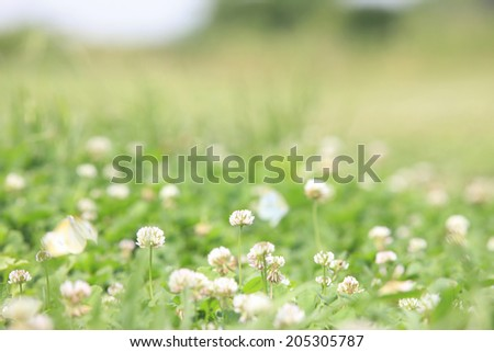 An Image of Butterfly And Clover