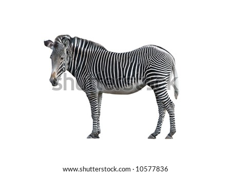 an introduction and background of the plains zebra Volume: 172 the common zebra is an uncommon mammal the common zebra is an uncommon mammal richard d estes, phd, explores the evolutionary rationale behind this most intriguing paradox if you have ever tried to sex and age the common or plains zebra, you will know it is hard work eagle-eyed.