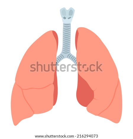 Human lung anatomy diagram stock vector 524860882 shutterstock anatomic lungs illustration on white background ccuart Image collections
