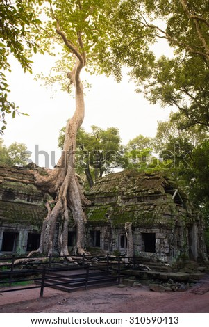 Ancient Ruins Of Ta Prohm In The Jungle, Cambodia
