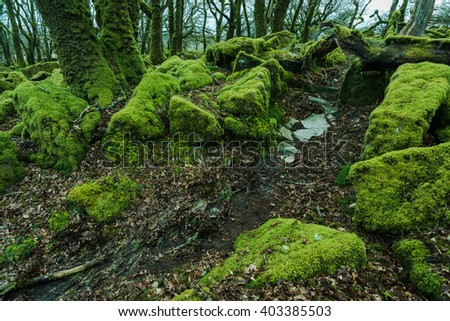 Ancient woodland with old trees and stones covered in moss. Dartmoor National Park in Devon, UK.